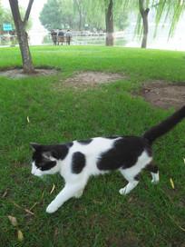 一只奔向目标的小猫