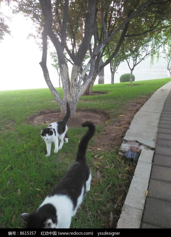 园林中两只漫步的小猫图片