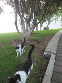 园林中两只漫步的小猫