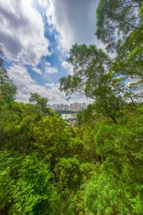 从飞鹅岭远眺惠州城市风光