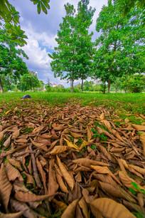惠州学院草地里的落叶