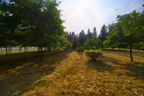 惠州学院的绿地