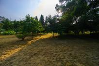 惠州学院的绿化公园