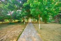 惠州学院的绿色小路