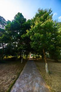 惠州学院的小路