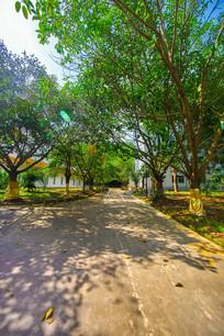 惠州学院内的绿色小路