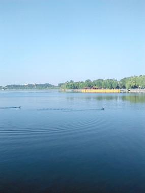 蓝天碧水中追逐的小鸭子
