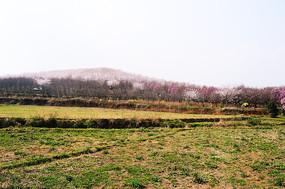 田野与山上的花园