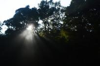 阳光透过树林