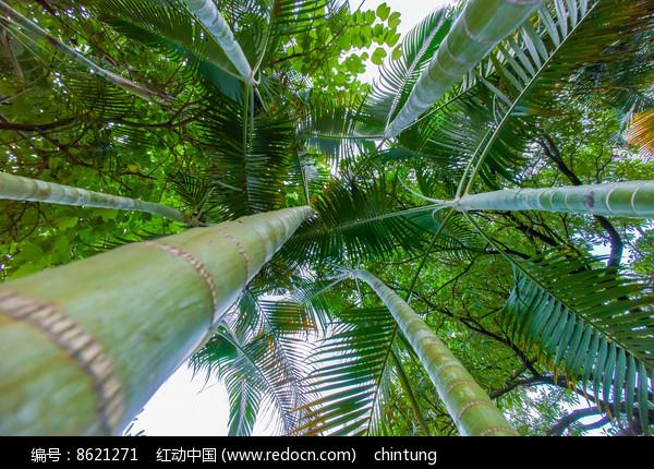 仰视竹子一样的树木图片