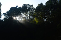 原始森林里的阳光