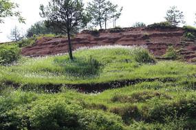 红沙坡旁绿草