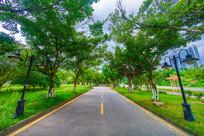 惠州大学里的绿色道路