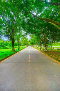 学校里的绿色道路