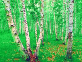 电脑画《白桦林风景》