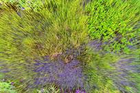 湿地湖泊水草 (航拍)
