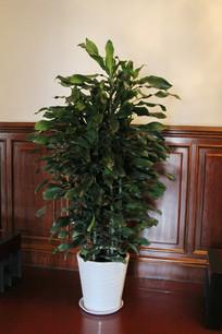 室内绿植花盆