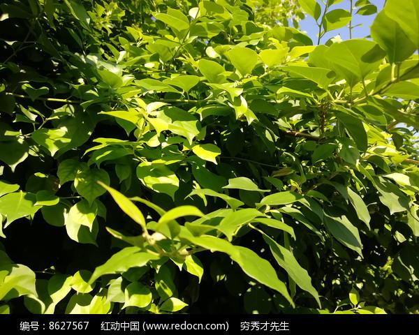 树木枝叶图片