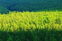 绿色的林海风景