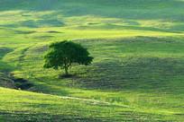 绿色原野上的一棵树