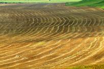 收割后的农田