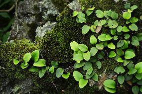 岩石上的草