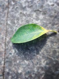 地板的一片落叶
