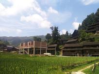 蓝天下的乡村稻田