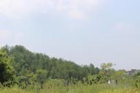 森林式风景
