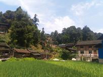山村水稻田