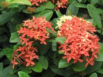 盛开的红色小花