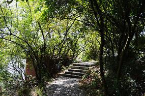 树林里的林荫小道