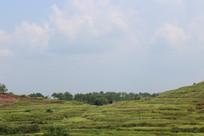 梯田式景观