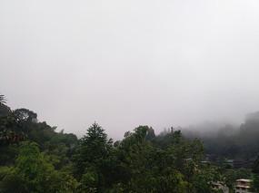 云雾下的森林