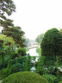 满眼绿色的景观
