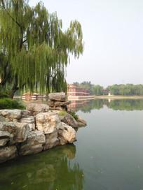 夏日园中的湖边一景