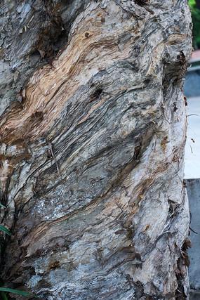白千层树皮纹理