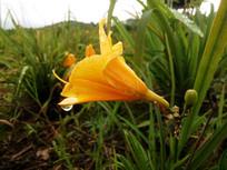 花朵上的水滴