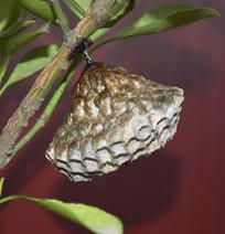 昆虫的世界蜂巢特写