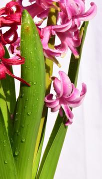 绿叶衬红花花卉特写