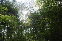 树林透露阳光