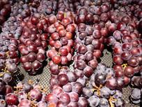 紫红色的葡萄堆