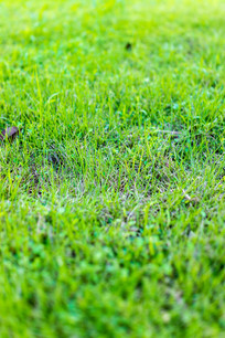 草地的特写