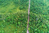 林海中狭窄的山路 (航拍)