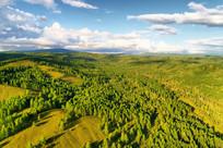 绿色林海风景(航拍)