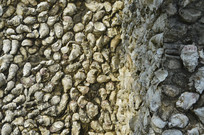 蚌壳墙壁近拍摄影图