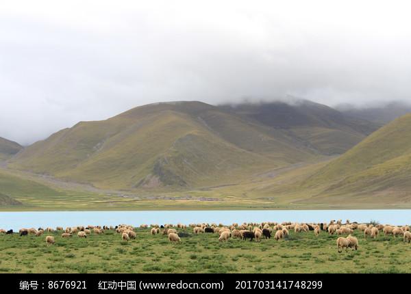 西藏美丽的羊卓雍措 图片