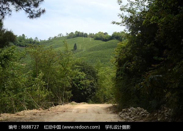 贵州黎平茶园风景图片