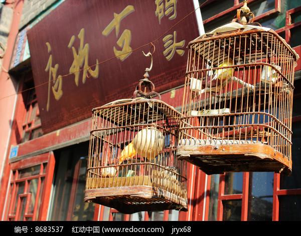 笼子中的小鸟图片