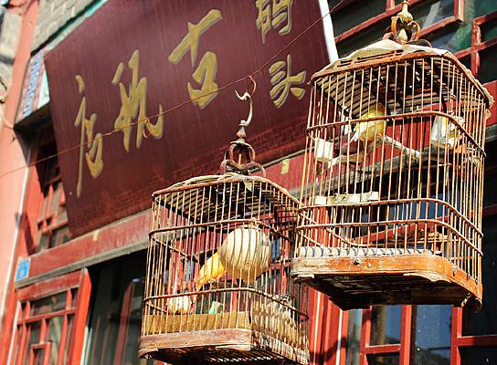 笼子中的小鸟